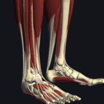 足首を使えるようにして、歩きやすくする!